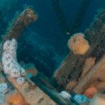 duiken noordzee